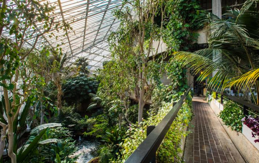 The Barbican Conservatory is a great escape from the hustle and bustle of city life.