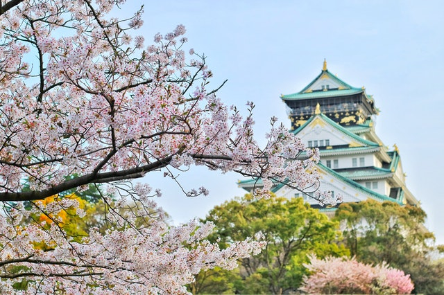 In Japan, spring is marked by the blooming of the cherry blossom.