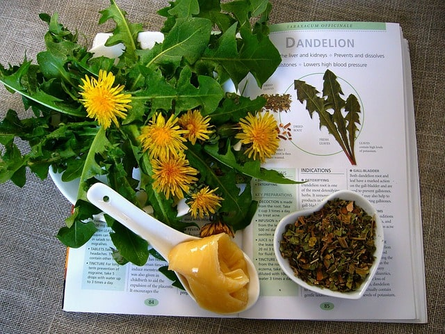 Dandelion leaves can be eaten cooked or raw.