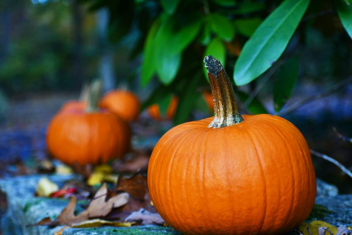 Pumpkins symbolize the fall season.
