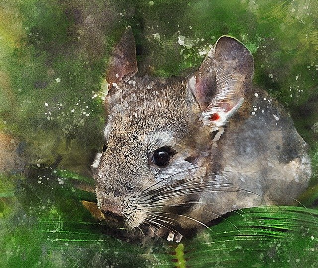 Chinchillas are native to the mountains of the Andes in South America.