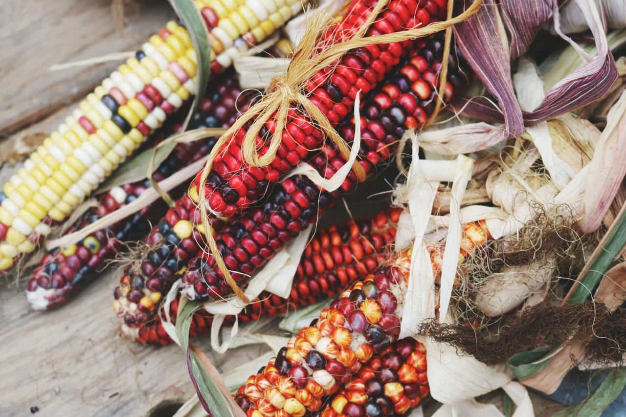Corn comes in many colours, including red and black.