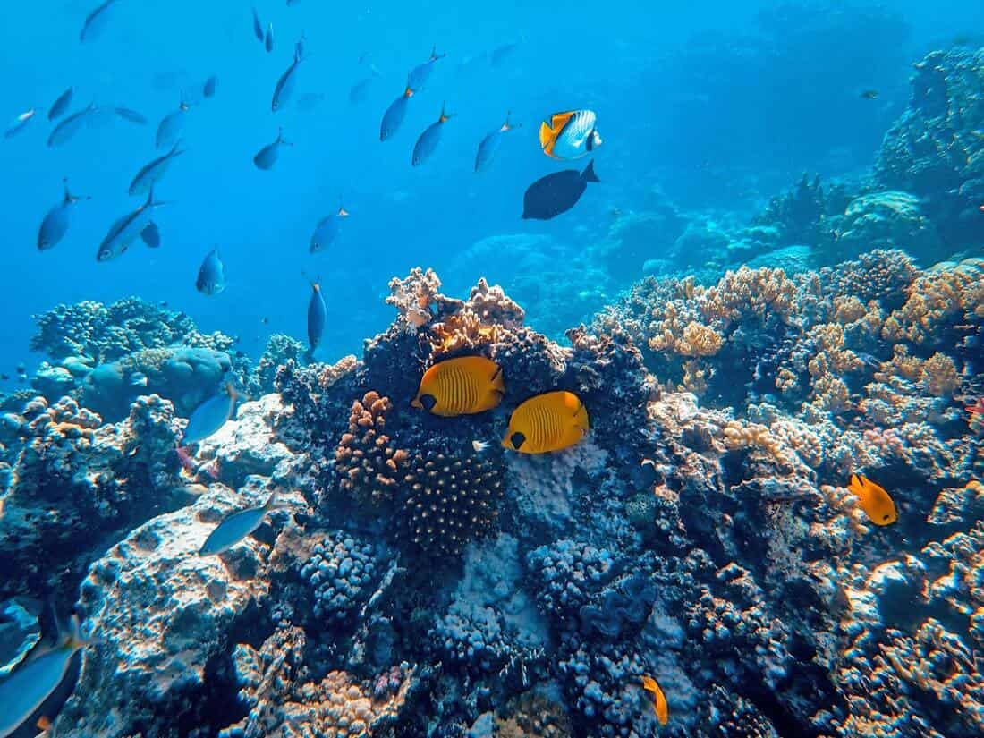 Honduras is home to the second largest coral barrier reef in the world.