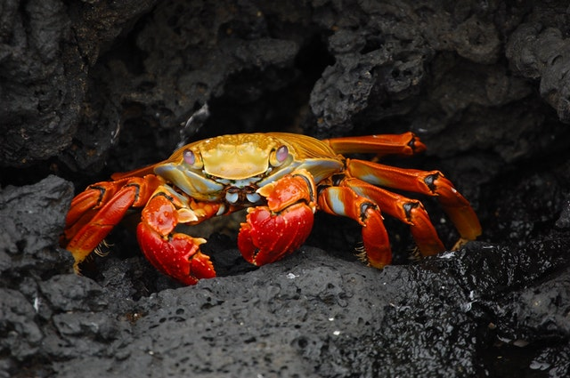 'Cancer' in Latin translates to crab.