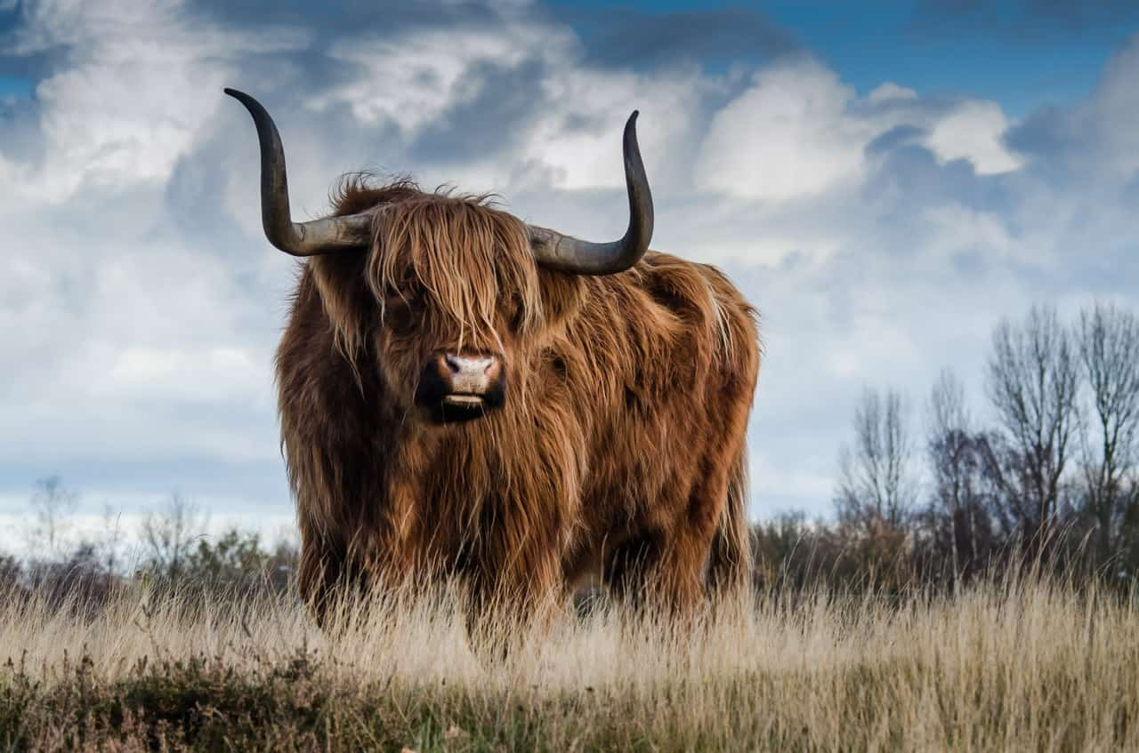 The zodiac symbol for Taurus is the bull.