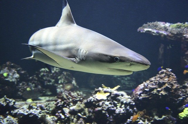 There are over 500 species of shark.