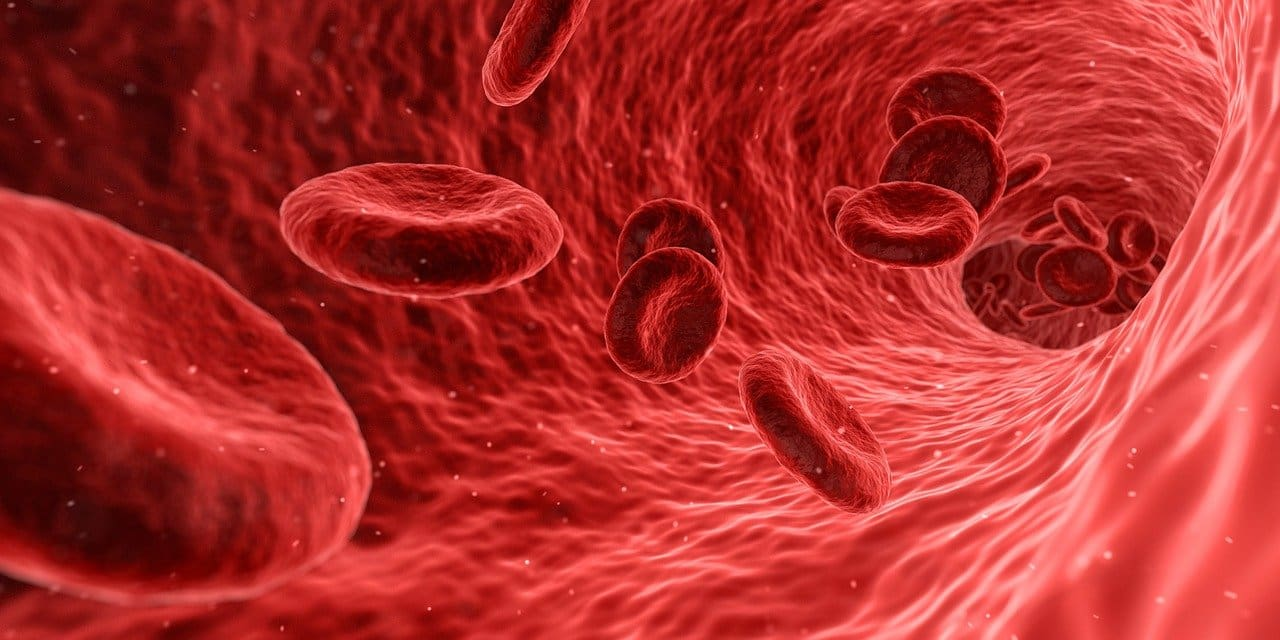 There are both red and white blood cells in our circulatory system.