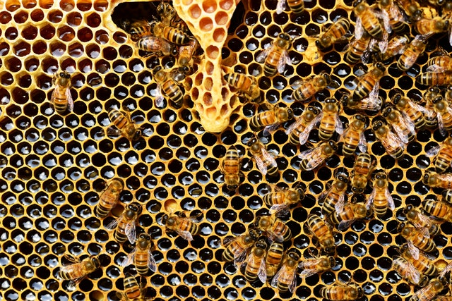 it takes about eight bees a lifetime to produce a teaspoon of honey!