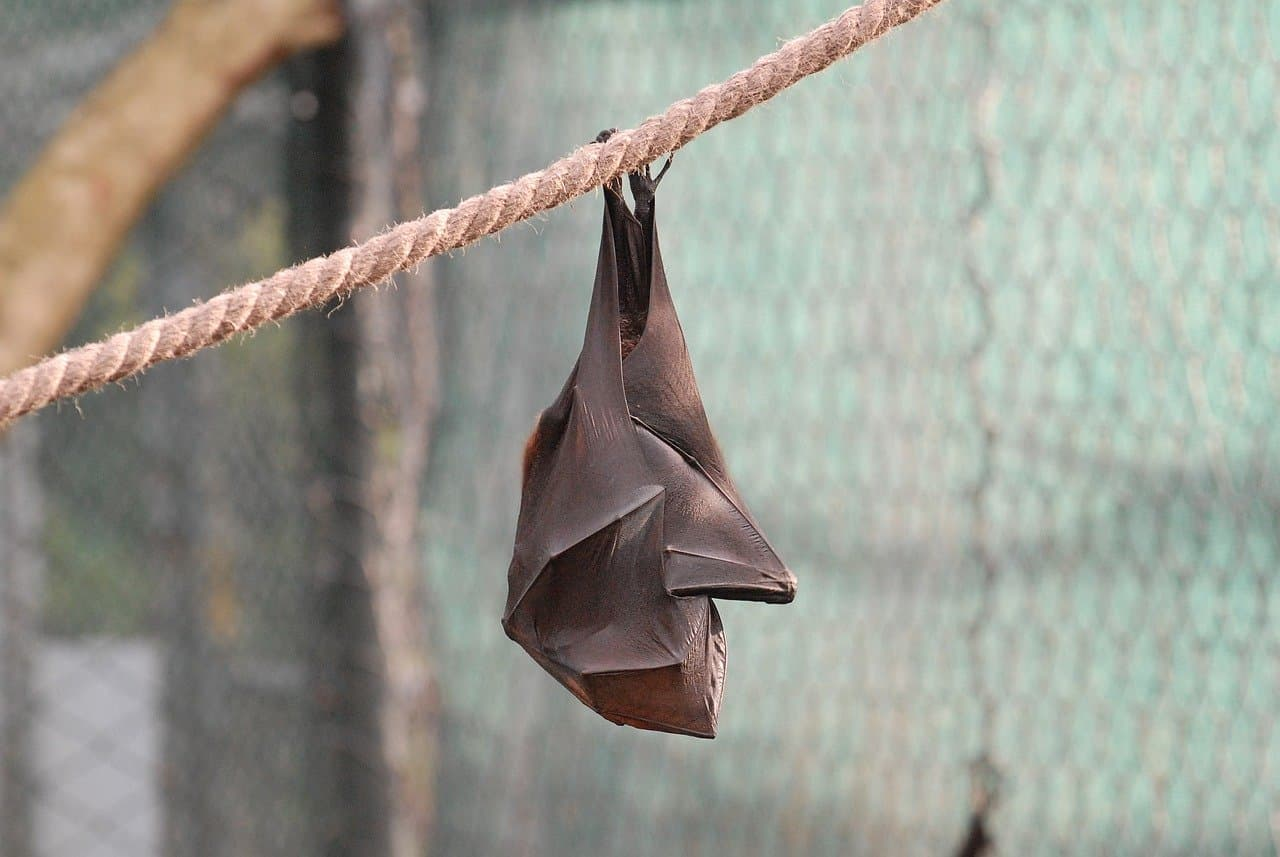 Bats often wrap themselves up to keep warm.
