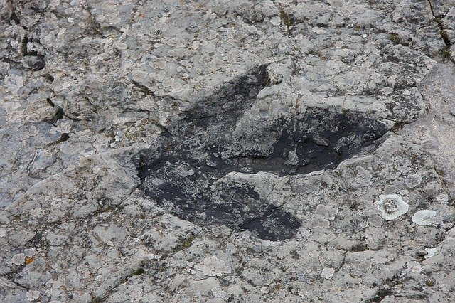 Dinosaur foot prints give us many clues about life in the Mesozoic era.