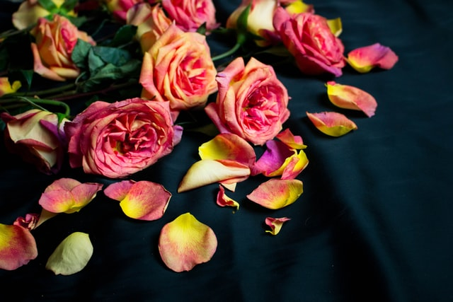 It's possible to create roses with rainbow rose petals.