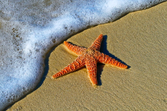 Most starfish have 5 arms.