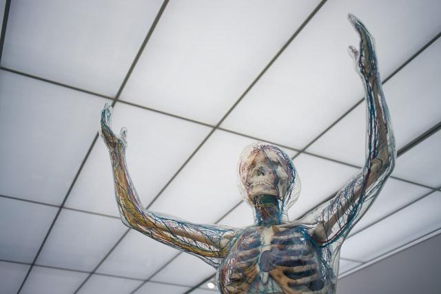 Bone jokes are not really scary.