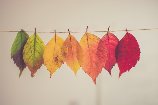 Autumnal pictures are popular on Instagram!