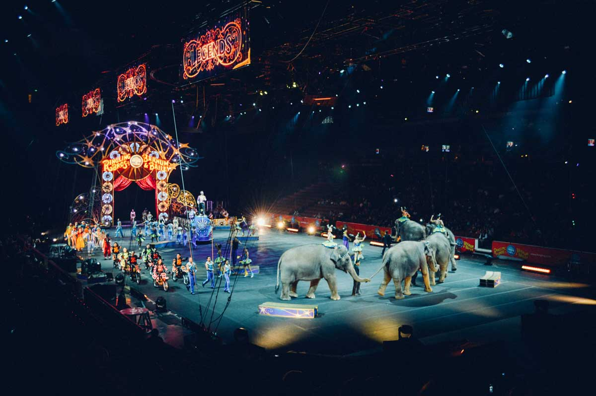 There are numerous fun and unique circus names.