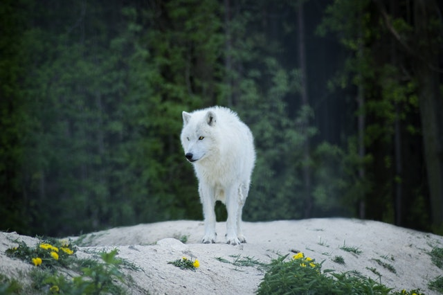 Wolves deserve the most amazing names.