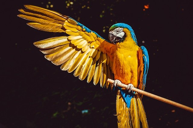 A perfect name for a parrot should be unique