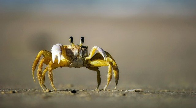 A perfect crab name matches the cuteness of the crab.