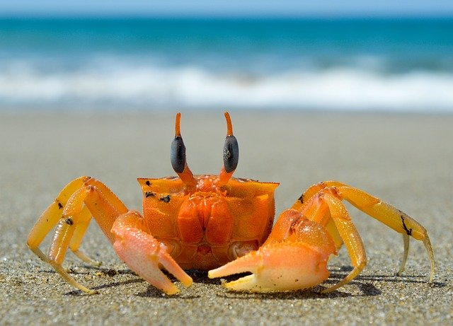 A crab name should be cool and creative.