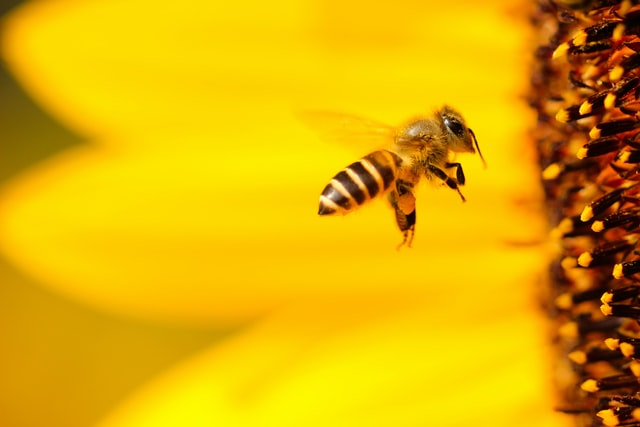 Check out these amazing bee inspired names.