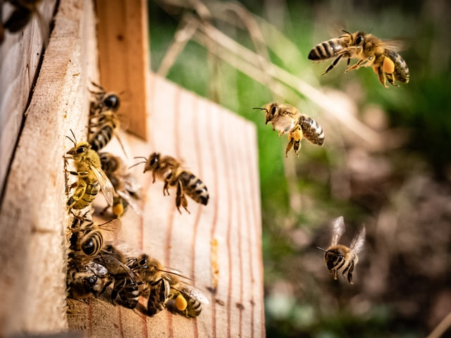 Busy bees help make the ecosystem go round