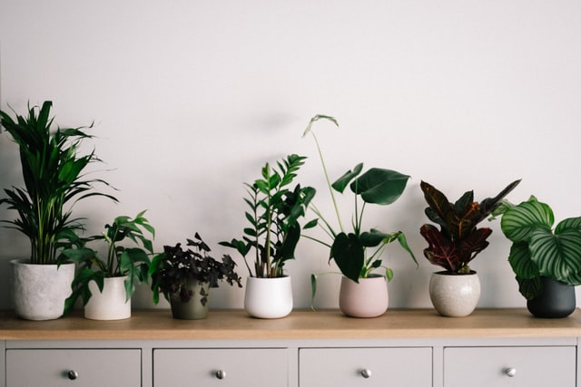 There are common house plant names as well as tropical house plants names on this list .