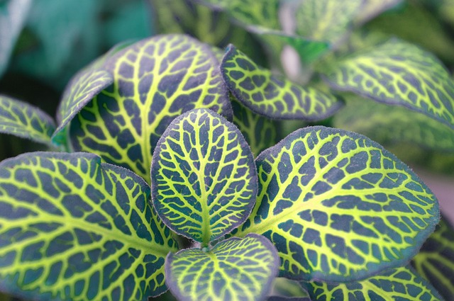 Beginners can easily start with these type of plants that are easy to care for.