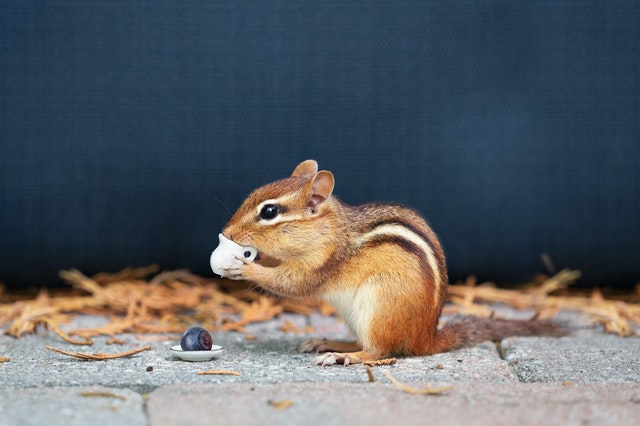 Children might be familiar with these chipmunk names.