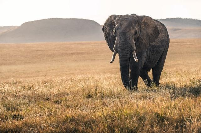 Bad elephant jokes are not irrelephant to the conversation.