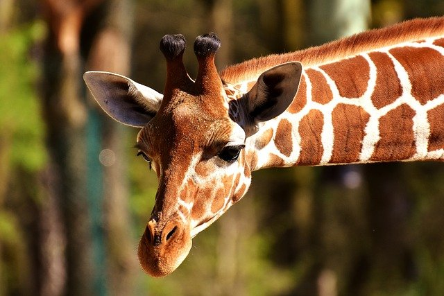 All the baby giraffe names on the list are cute and adorable