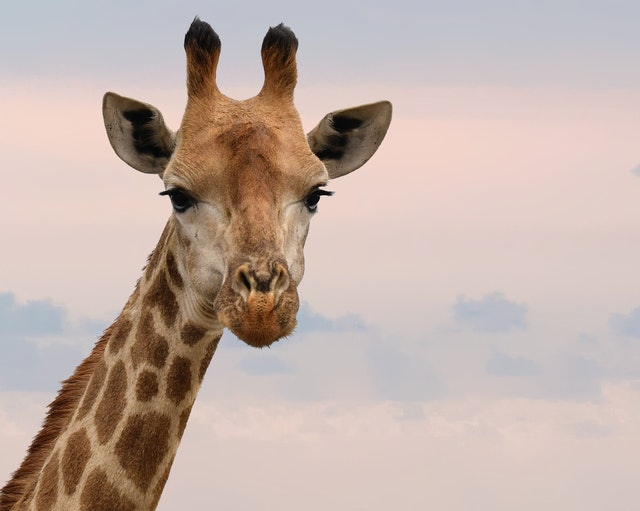 Giraffe babies are undoubtedly cute so why their names need to be cute too!
