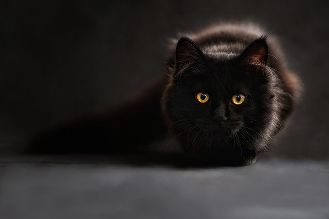Witch names and cat names have gone hand in hand for many centuries.