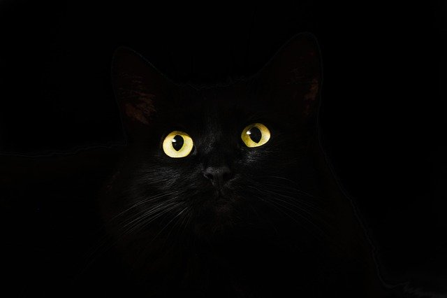 Witch names can be found around the world and they all suit cats, especially the black ones.