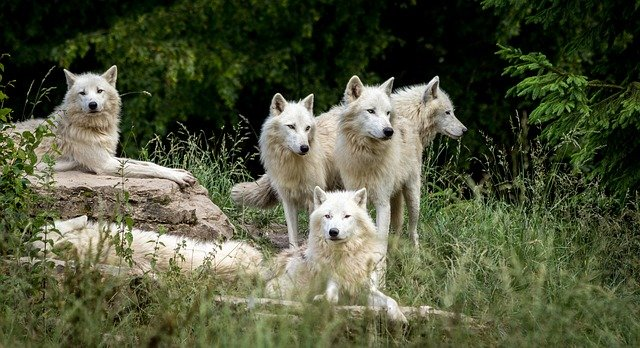 Nature inspired names are great choices for a wolf pack name.