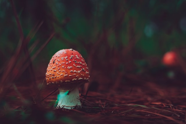 These mushroom puns are sure to crack you and your loved ones up.