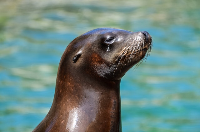 There are many seal names that are very cute.