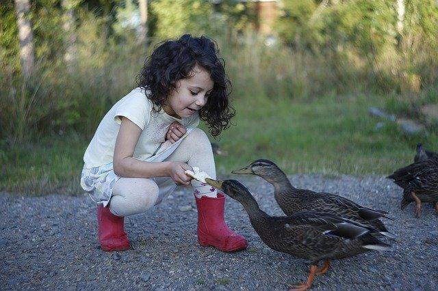 Backyard ducks puns will definitely make your day more fun.