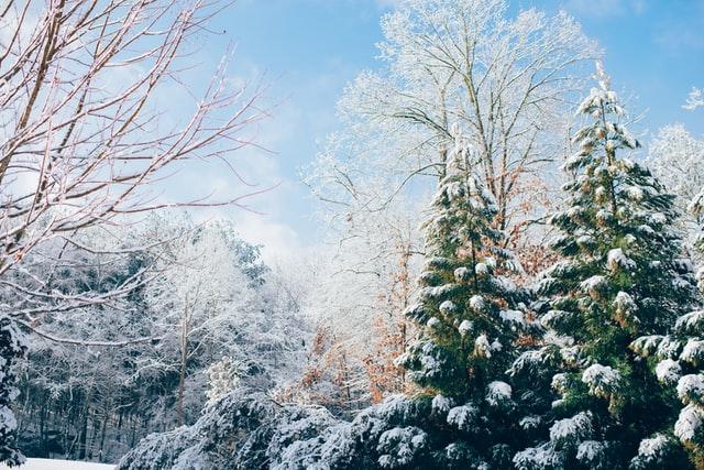 Wintertime is the season of festivities around the world.