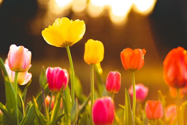 These quotes about tulips are sure to soothe your soul.