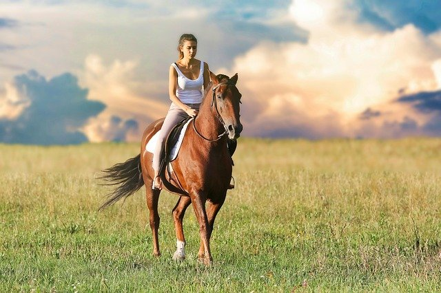 Horse riding is one of the most enjoyable hobbies one can have!