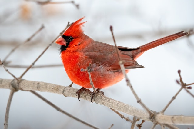 Find funny and strange facts about birds for kids here.