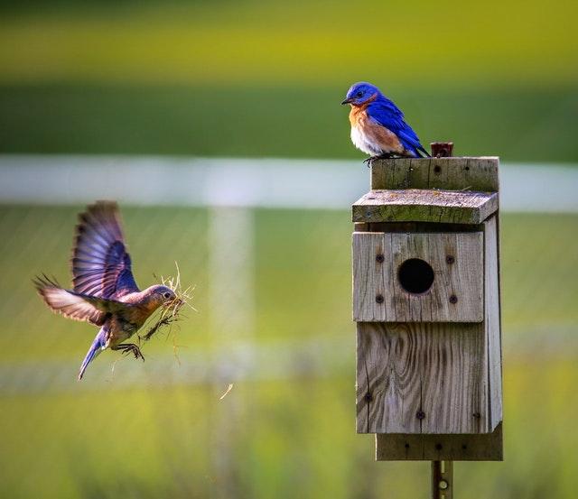 How many random bird facts do you know?