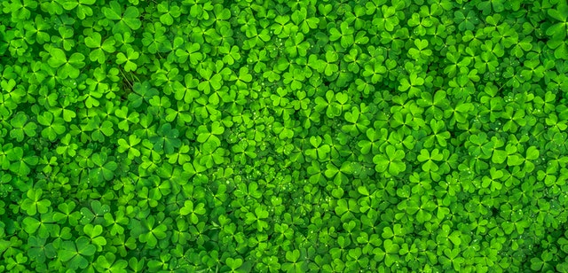 Why not try out this Saint Patrick's day quiz?