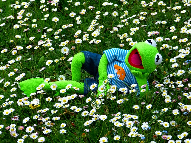 Kermit The Frog funny quotes that you need to know to go through days.