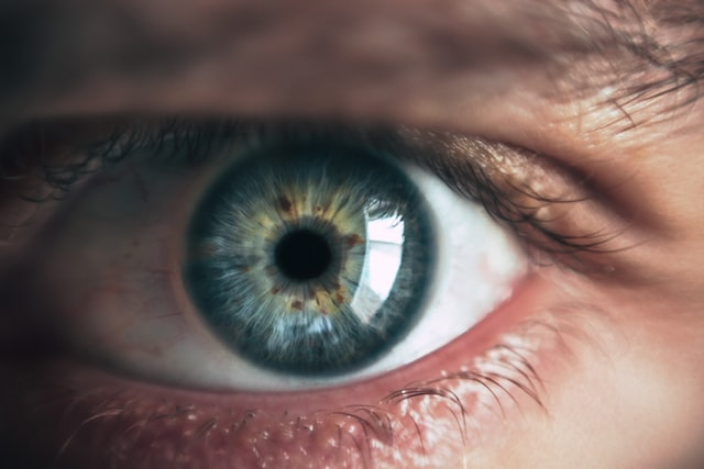 The eye has an iris, retina and cornea.