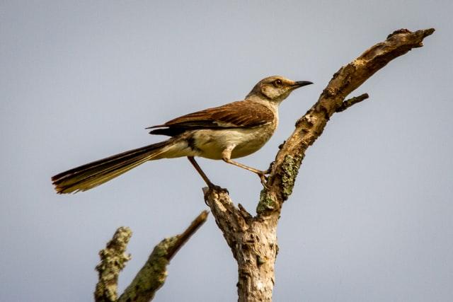 Published in 1960, 'To Kill A Mockingbird' is a novel written by Harper Lee.