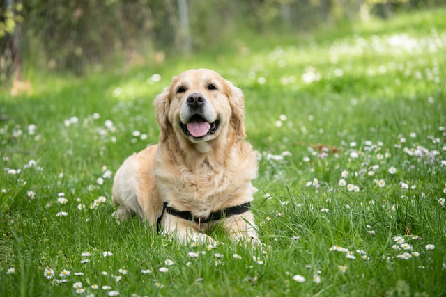 Quotes about men and dogs relation that are joyful.