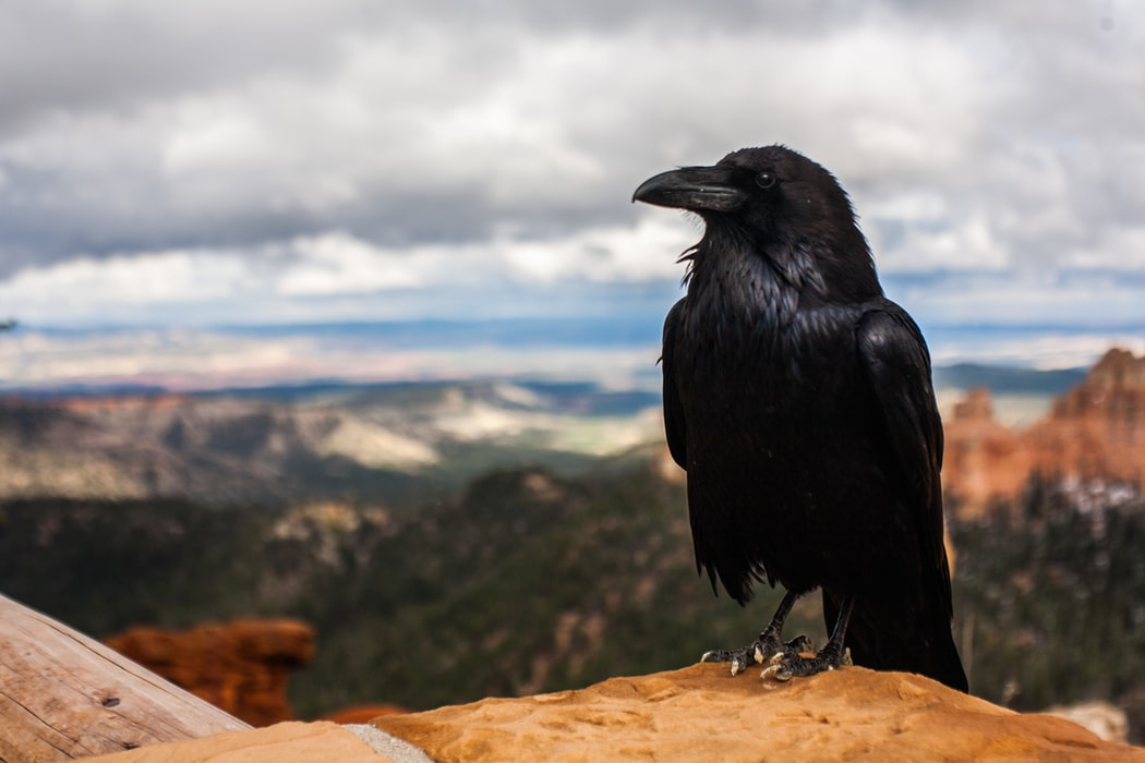 """Quotes from 'The Raven' are will make you want to say """"Nevermore"""" to the supernatural."""