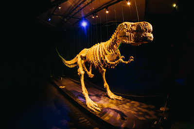 This T-Rex model was one of many creations at the touring Art of the Brick exhibition.