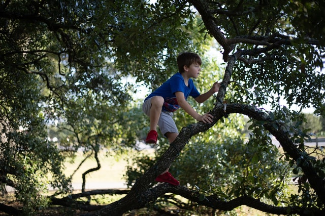 We have some interesting climbing trees quotes among these funny climbing quotes.